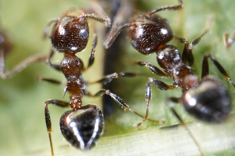 Ant Talk